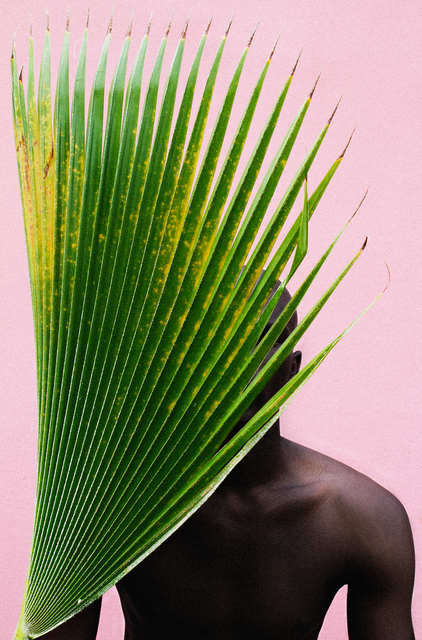 , 'Untitled (Palm Frond),' 2013, WHATIFTHEWORLD