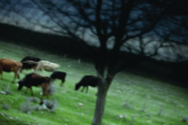 , 'Cows,' 2009, Leeahn Gallery