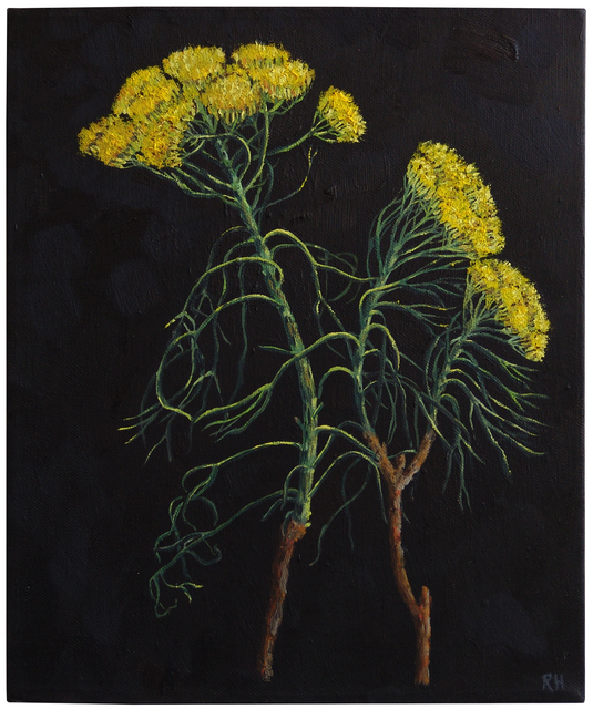 , 'Hymenolepis, False Karoo, Basterkaroo cuttings,' 2017, Absolut Art Gallery