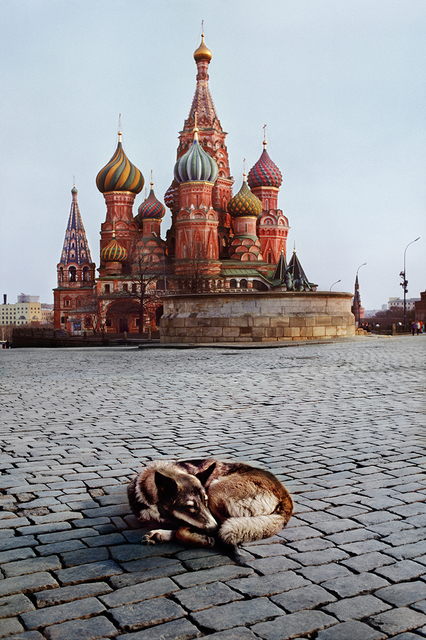 Steve McCurry, 'Dogs sleeps near St. Basil's Cathedral, Moscow, Russia', 1993, Photography, Archival Pigment Print, Staley-Wise Gallery