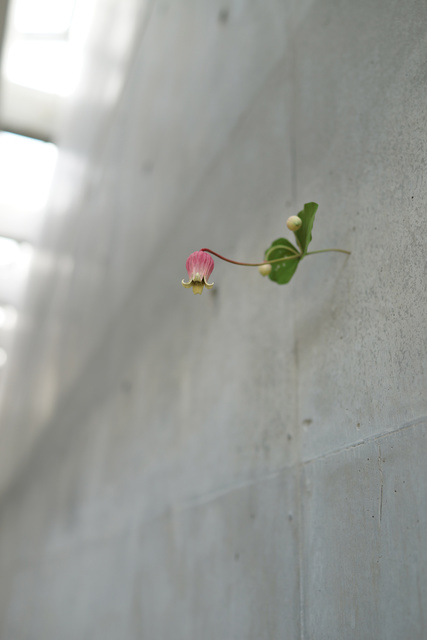 , 'Haizawa,' 2018, Aki Gallery