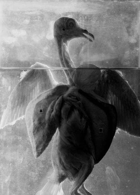 Koo Bohnchang, 'Breath 10', 1995, Photography, Three Shadows +3 Gallery