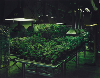 Research Marijuana Crop Grow Room, National Center for Natural Products Research, Oxford, Mississippi from An American Index of the Hidden and Unfamiliar