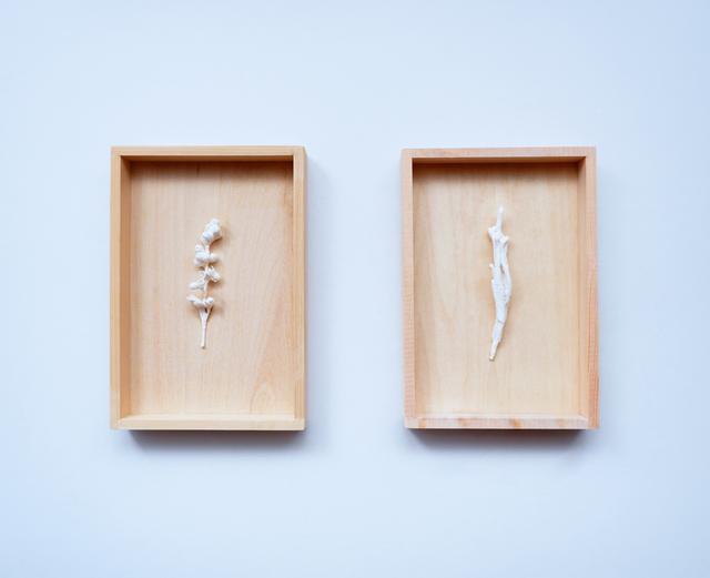 Kanami Takeda, 'White Specimens', 2017, Gallery LVS