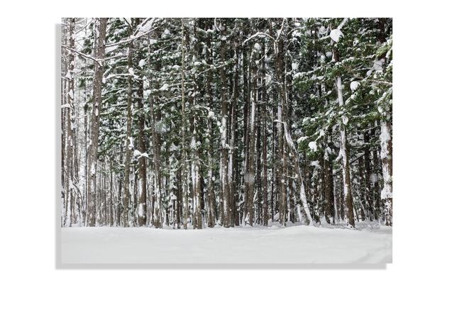 Ti Foster, 'Japan Snow Forest', 2019, Kristy Stubbs Gallery