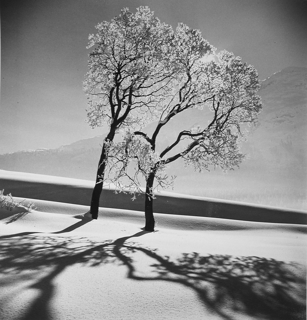 , 'Trees in snow, St. Moritz, 1947,' 1947, Monroe Gallery of Photography