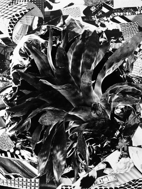 , 'Bromeliad,' 2015, MAMA