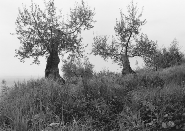 , 'Tuscan Trees #4,' 1996, Wirtz Art