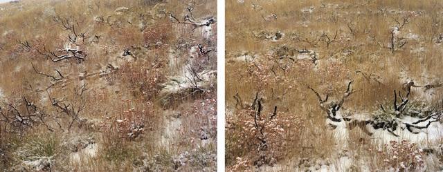 Laura McPhee, 'Late Fall (Burned Sage Brush)', 2008, Benrubi Gallery