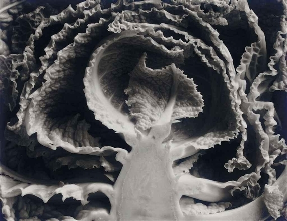 Edward Weston, 'Kale, Halved', 1930, Weston Gallery