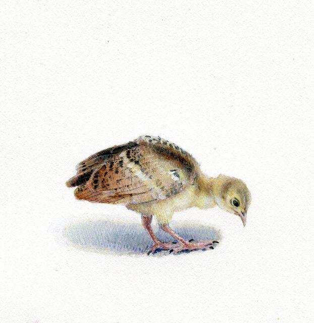 Dina Brodsky, 'Peacock Chick', 2018, Garvey | Simon