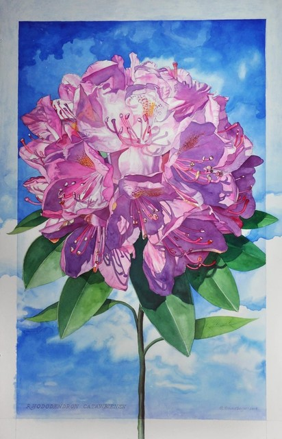 , 'Rhododendron Catawbiense,' 2014, The Bonfoey Gallery
