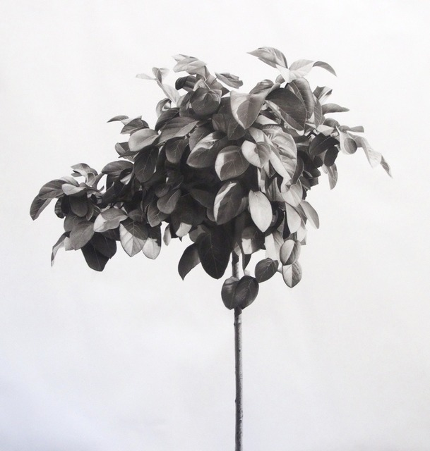 , 'Tree II ,' 2015, Purdy Hicks Gallery