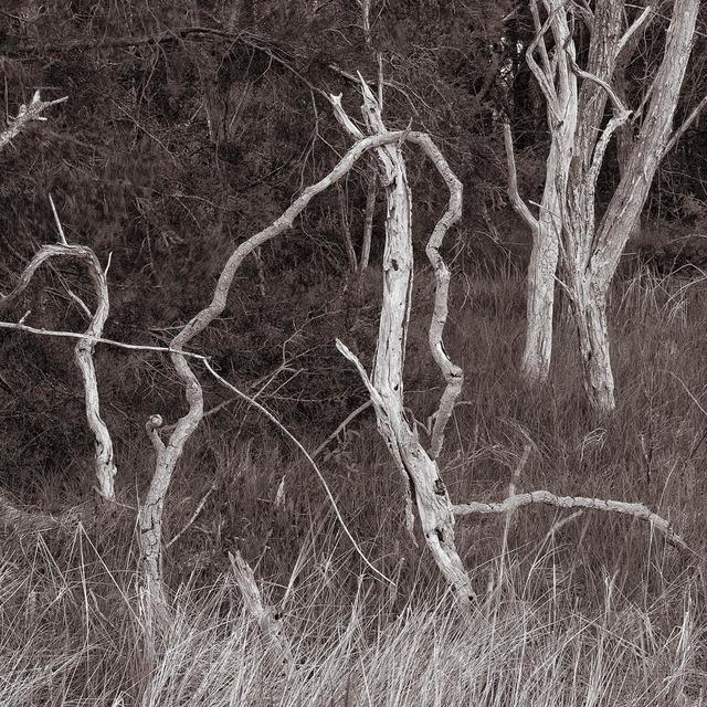 , 'Trees and Grass II, Wellfleet, Massachusetts,' , Soho Photo Gallery