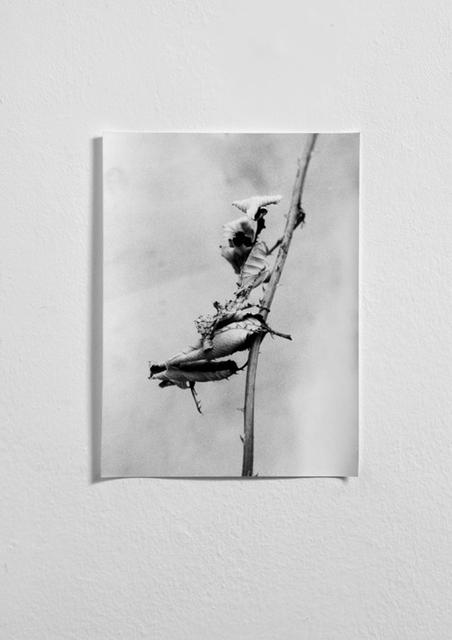 , 'Phasmid 1,' 2013, Norma Mangione