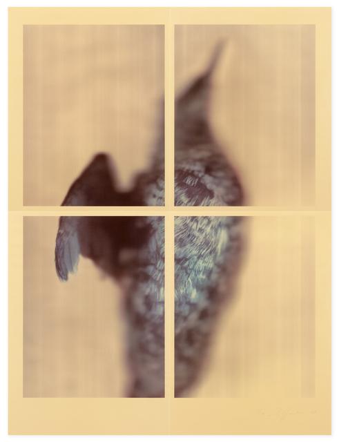 , 'Pigeon Guillemot,' 2017, Gemini G.E.L.