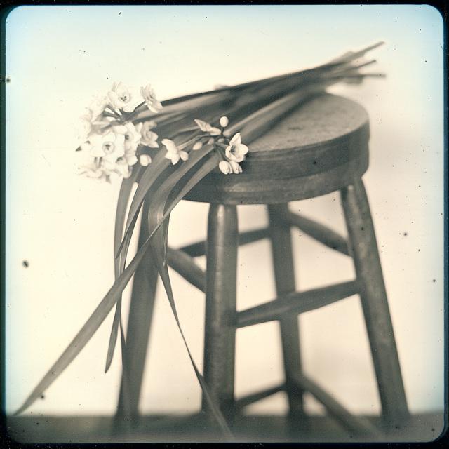 , 'March 7 Narcissus , Kawasaki ,' 2020, Purdy Hicks Gallery