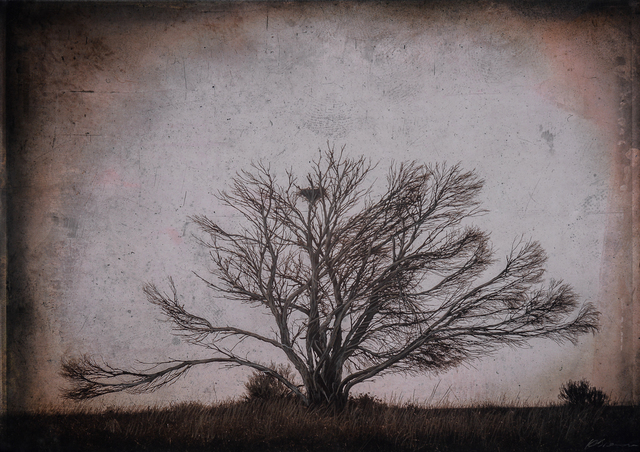 , 'Bare Tree with Nest, Nullarbour Plain, South Australia,' , Etherton Gallery