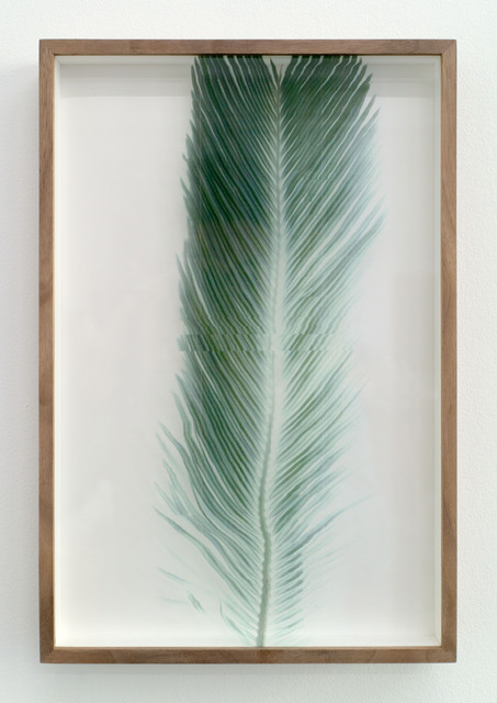 , 'Botanical Frottage - Manuela (Oaxaca series),' 2017, PROYECTOSMONCLOVA