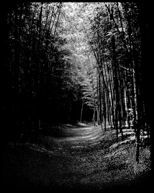 , 'Emptiness - Bamboo Grove,' 2018, Pontone Gallery