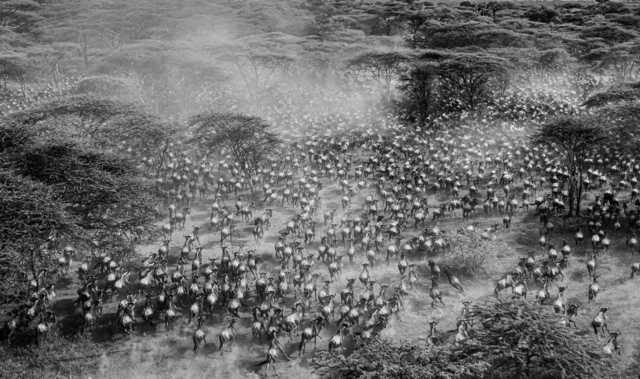 , 'The gathering, Tanzania,' 2016, Suite 59 Gallery