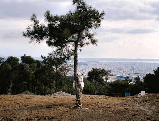 , 'Thessaloniki (Horse),' 2006, Dio Horia