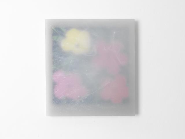 , 'Flowers Andy Warhol,' 2015, Studio la Città