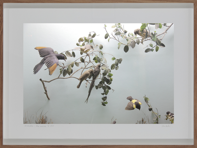 , 'Parrot Jungle, South African Museum, Cape Town,' 2009, Barnard