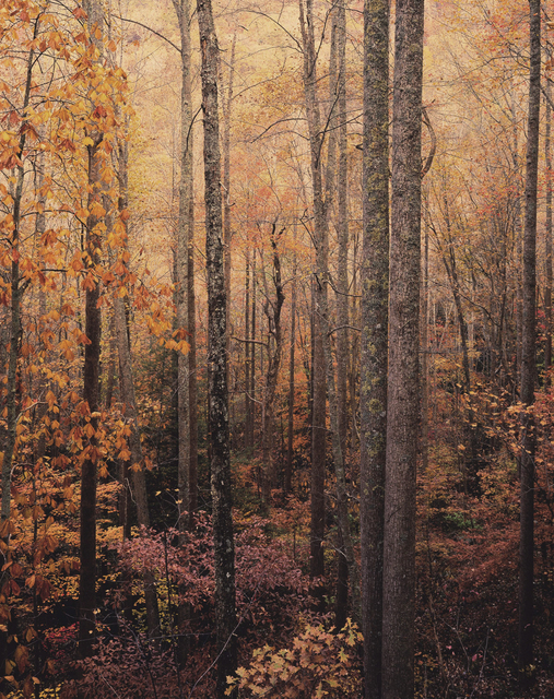 , 'Glowing Appalachian Forest, Virginia,' 2016, Photography West Gallery