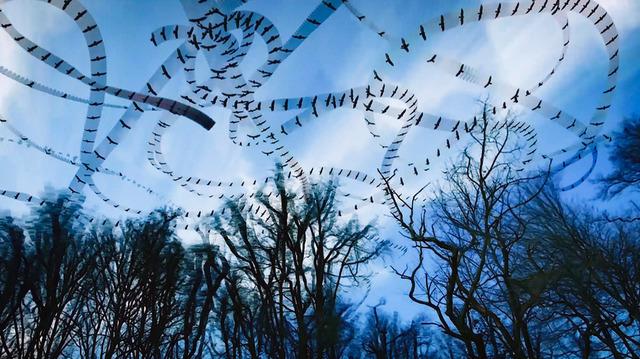 , 'Black Buzzards,' , Diehl Gallery