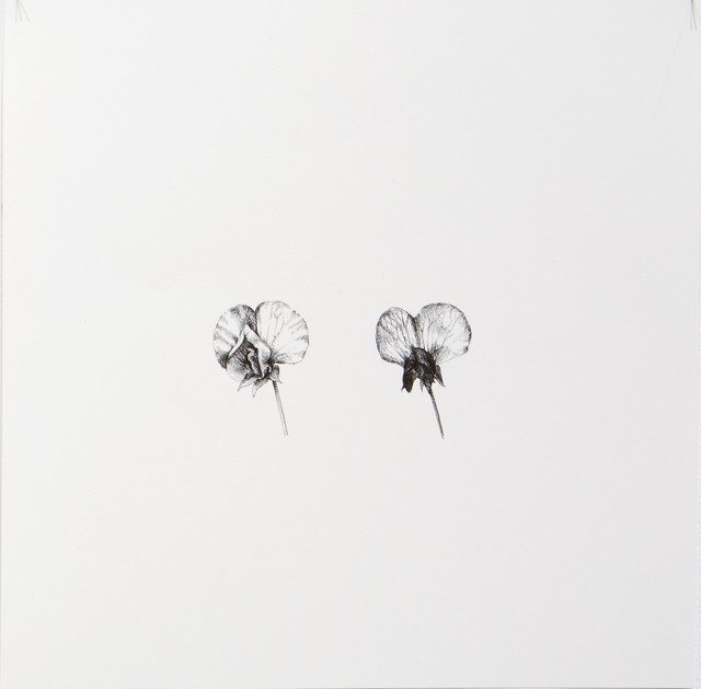 , 'Pysum Sativum 4,' 2016, Lucia Mendoza
