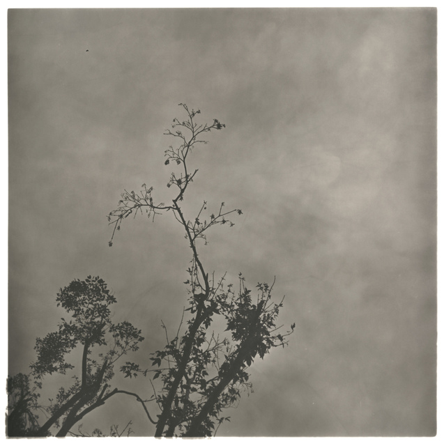 , 'Fog Branch No.3,' 2008, see+ Gallery