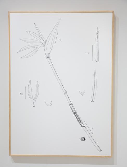 , 'PIT#17 STRELITZIA (BIRD OF PARADISE),' 2013, Chan + Hori Contemporary
