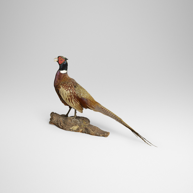 Ole Hoegh Post, 'Pheasant', Wright