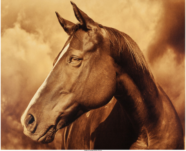 Michael Eastman, 'HP Horse #43', 2013, Heritage Auctions