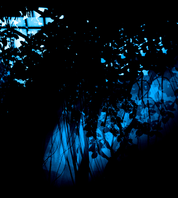 , 'Botanical Blue,' 2015, Galleri Bo Bjerggaard