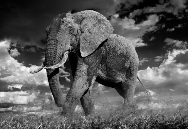 David Yarrow, 'The Patrician', 2014, Photography, Archival Pigment Print, Maddox Gallery