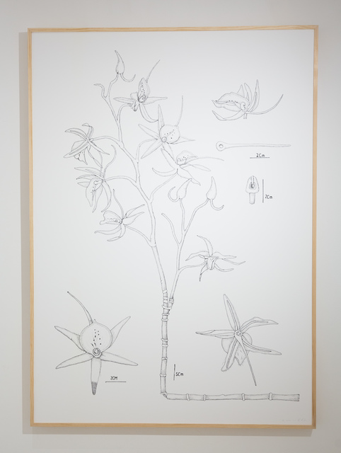 , 'PIT#19 OPHRYS SPHEGODES (SPIDER ORCHID),' 2013, Chan + Hori Contemporary