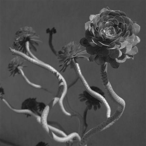 , 'BAILE AL SOL,' 1999, Galería Juana de Aizpuru