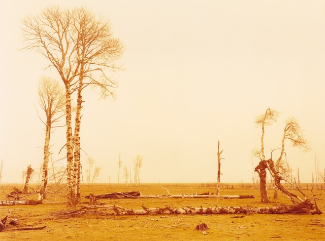 , 'Collapse, Siskiyou, California,' 2015, Moran Moran