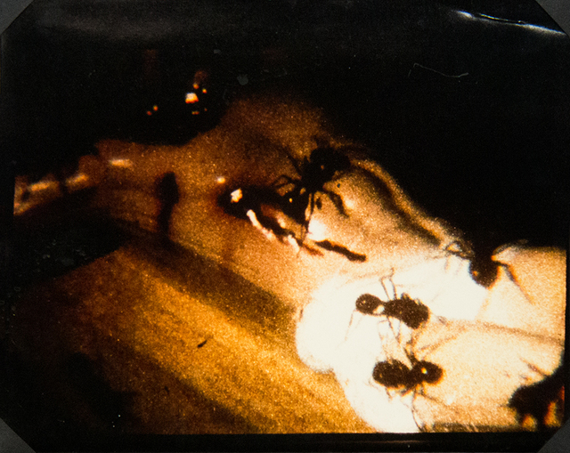 , 'A Fire in My Belly (Film Still) [Ants on Crucifix],' , ClampArt