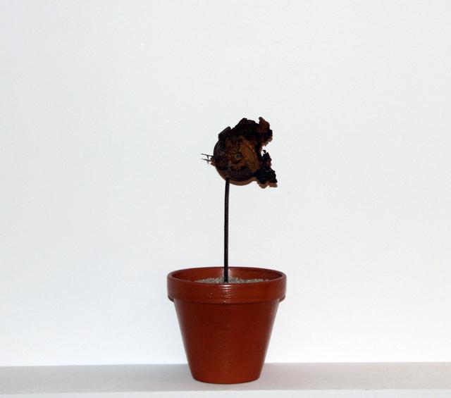 , 'Linzer Blume,' , Mario Mauroner Contemporary Art Salzburg-Vienna