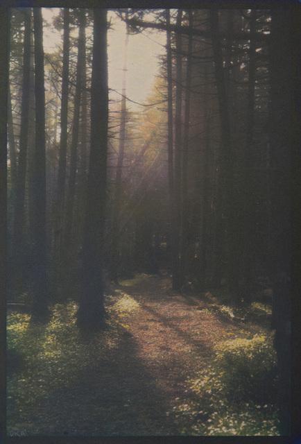 , 'Monhegan Spruce Forest,' , Soho Photo Gallery