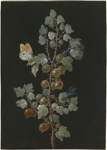 Barbara Dietzsch, 'A Branch of Gooseberries with a Dragonfly, an Orange-Tip Butterfly, and a Caterpillar', 1725-1783, Drawing, Collage or other Work on Paper, Gouache over graphite on prepared vellum, National Gallery of Art, Washington, D.C.
