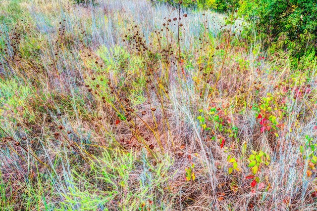 , 'Blue Stem Grass, Fort Worth, Texas, October 2015,' 2015, William Campbell Contemporary Art, Inc.