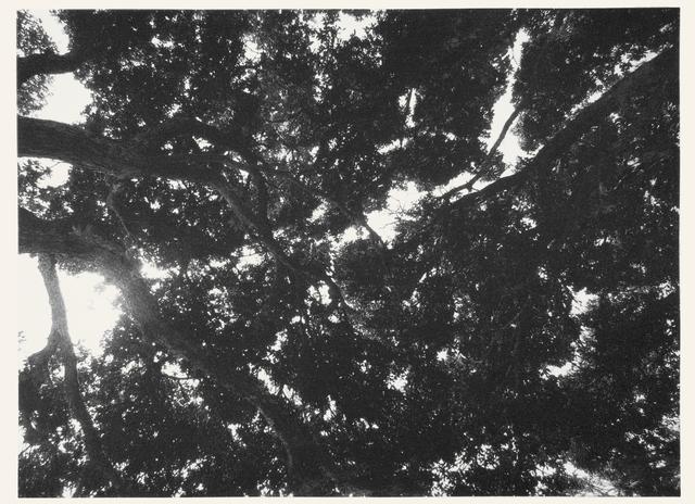, 'Sem Título,' 2014, Mul.ti.plo Espaço Arte