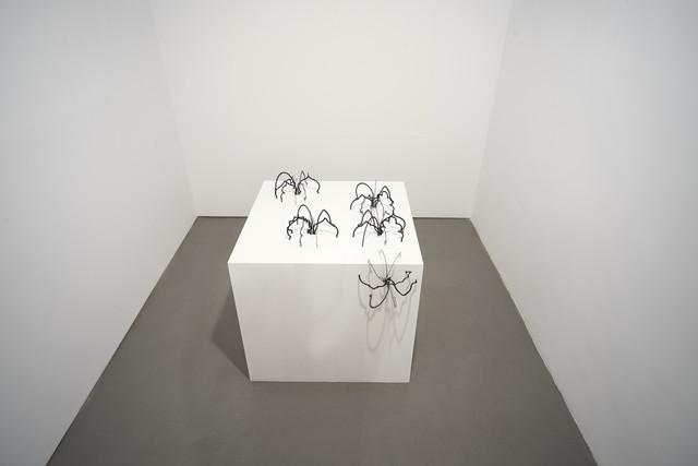 , 'Les Araignées,' 2013, Sabrina Amrani