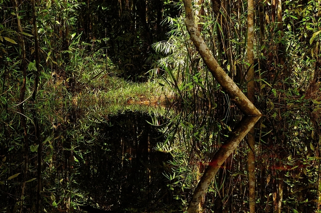 , 'River Under Dome of Trees,' 2005, Gabarron Foundation