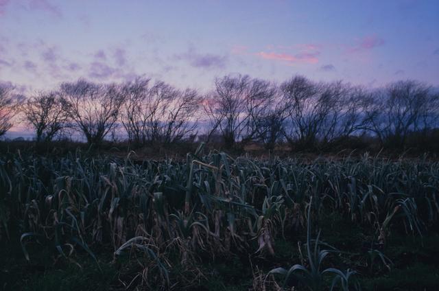 , 'Leek Field, Norfolk,' 2006, Osborne Samuel