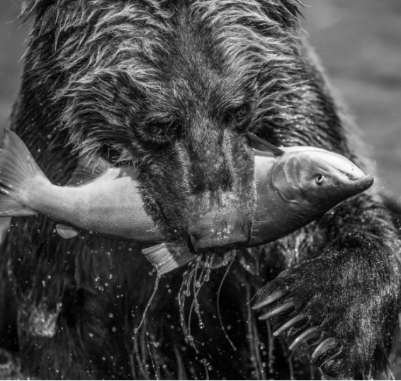 David Yarrow, 'Primeval', Photography, Visions West Contemporary